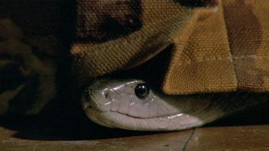 Photo of Змея под кроватью